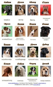 dogs_and_types
